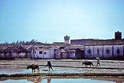 Men Powing Field With Oxen