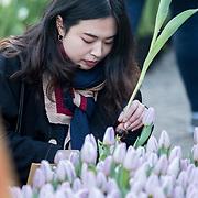 NLD/Amsterdam/20190119 - Nationale Tulpendag 2019, doop tulp Quinty Trustfull, Chinese toeriste plukt tulpen