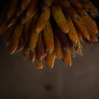 corn saved for seed hangs from a ceiling in rural Honduras