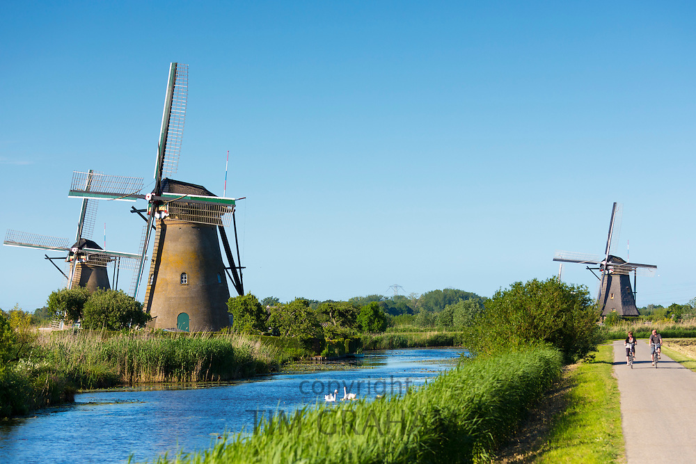 Cyclists pass group of authentic windmills at Kinderdijk UNESCO World Heritage Site, polder, swans on dyke, Holland