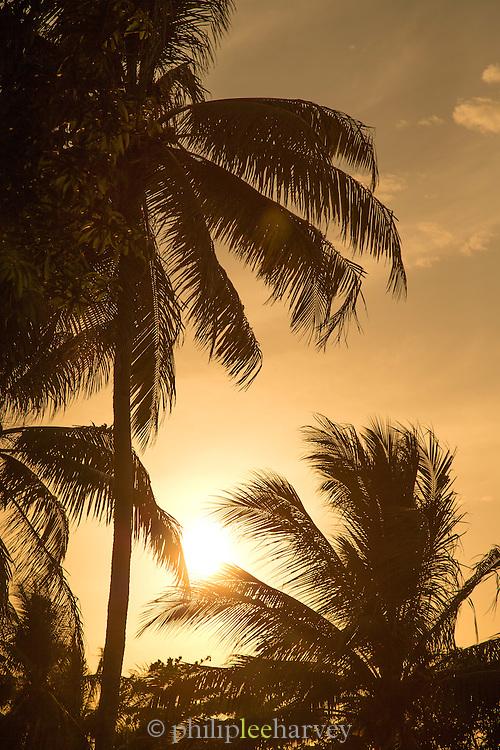 Silhouette of palm trees, Tufi, Cape Nelson, Oro Province, Papua New Guinea