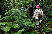 Ecuador, April 27 2010: Images from Río Canandé Reserve...Copyright 2010 Peter Horrell