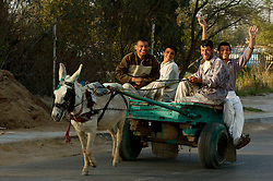 Iraqi Civilians on a donkey drawn cart travel through the Basra City as the Iraqi commuter morning rush hour begins passing British Troops who are carrying out an I ED sweep in the area. March 2005