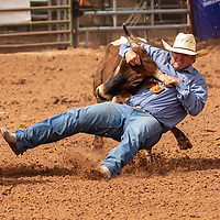 Photo: Jeffery Jones<br /> Beau Kelley grabs a steer by the horns during the steer wrestling event Saturday  during the New Mexico High School Rodeo Association State Finals at Red Rock Park.