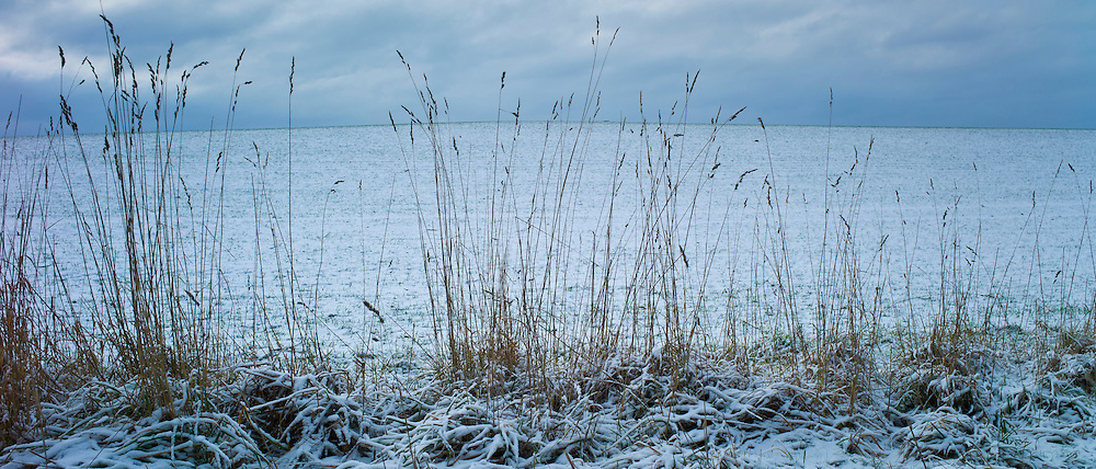 Winter scene field and grasses in frosty weather, The Cotswolds, UK