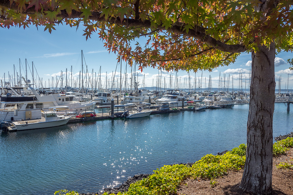 United States, Washington, Seattle, boats at Elliott Bay Marina, and fall foliage