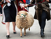 Simone Lakmaker walks Sheep over London Bridge 27th April 2019