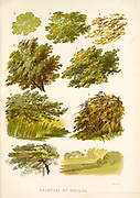 Examples of Foliage from the book  The theory and practice of landscape painting in water-colours illustrated by a series of twenty-six drawings and diagrams in colours and numerous woodcuts by Barnard, George, 1807-1890 Published in 1885 by George Routledge and Sons London