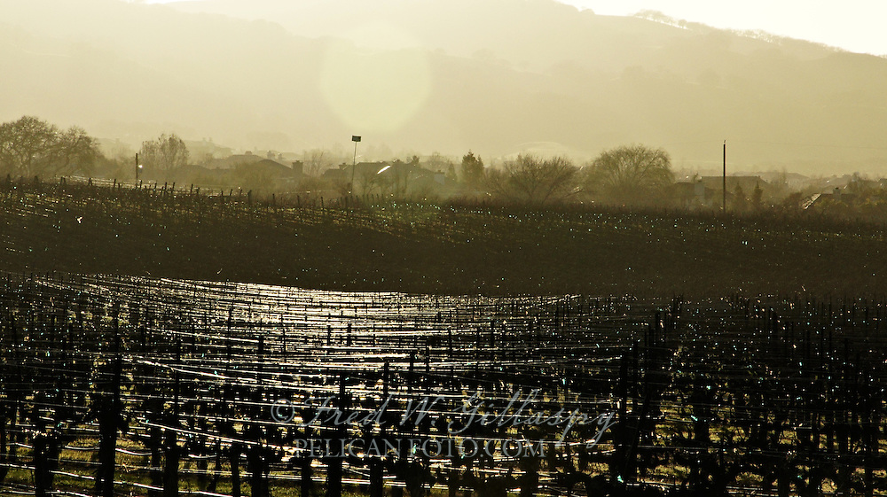 Vines At Sunset - West Livermore Valley