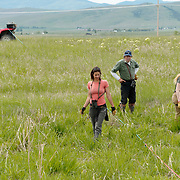 Owl Research Institute crew banding short-eared owls chicks. Ninepipe NWR. Charlo, Montana
