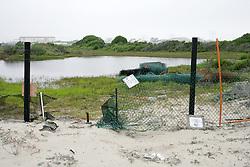Plant Life On Orond Beach Area Marsh & Pond