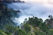 Madeira forest at morning