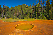 The Paint Pots where iron-rich mineral springs stain the surrounding earth a vibrant ochre colour. CAnadian Rocky Mountains<br />Kootenay National Park<br />British Columbia<br />Canada