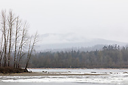 Rare icing up of the edges of the Fraser River (with some floating ice) in Glen Valley - Abbotsford, British Columbia, Canada.  It is not common for the Fraser River to contain ice, but every few years it is cold enough and chunks of ice float towards the coast from colder climes inland. The trees on the left are on the east end of Crescent Island.