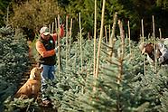Oregon Tree Farm