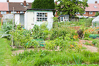 potting shed on an allotment