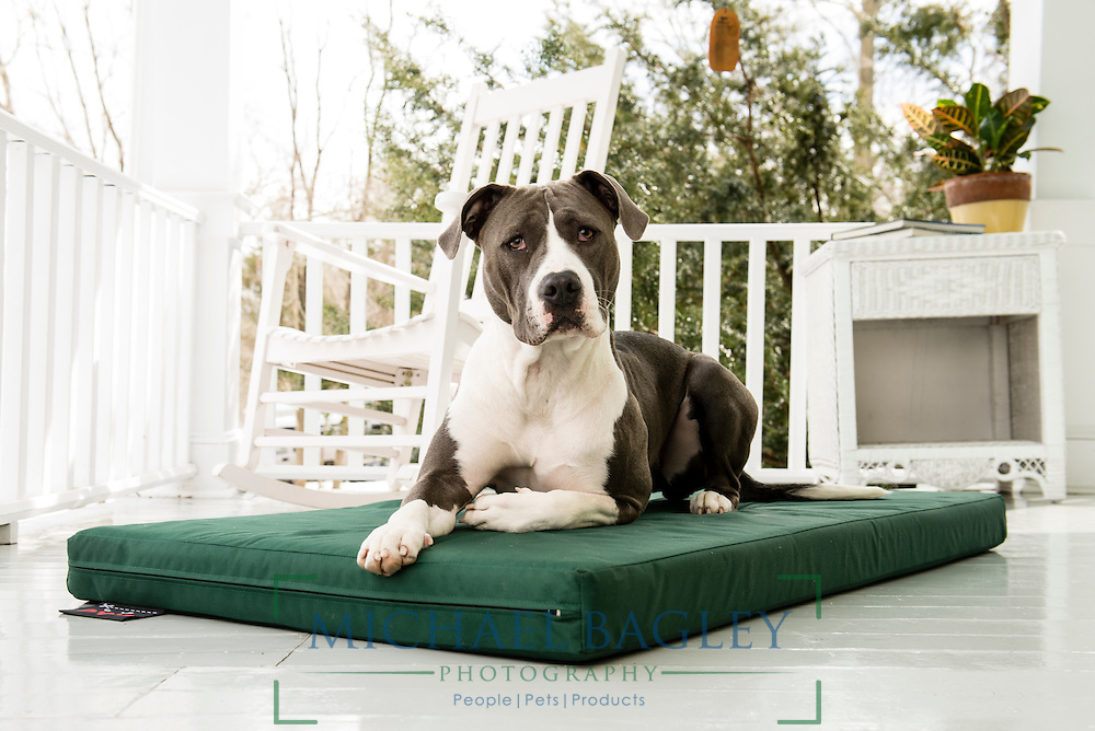 Rescue dog sitting on Dog Gone Smart Pet Products' Ninja Bed.