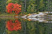 Muskoka (Adirondack) chairs and Red maple tree (Acer rubrum) at Grundy Lake<br />Grundy Lake Provincial Park<br />Ontario<br />Canada