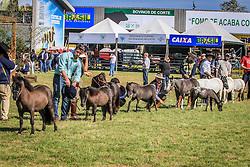 Coletiva de imprensa da Fazenda Jaguaretê durante a 38ª Expointer, que ocorre entre 29 de agosto e 06 de setembro de 2015 no Parque de Exposições Assis Brasil, em Esteio. FOTO: Jefferson Bernardes/ Agência Preview