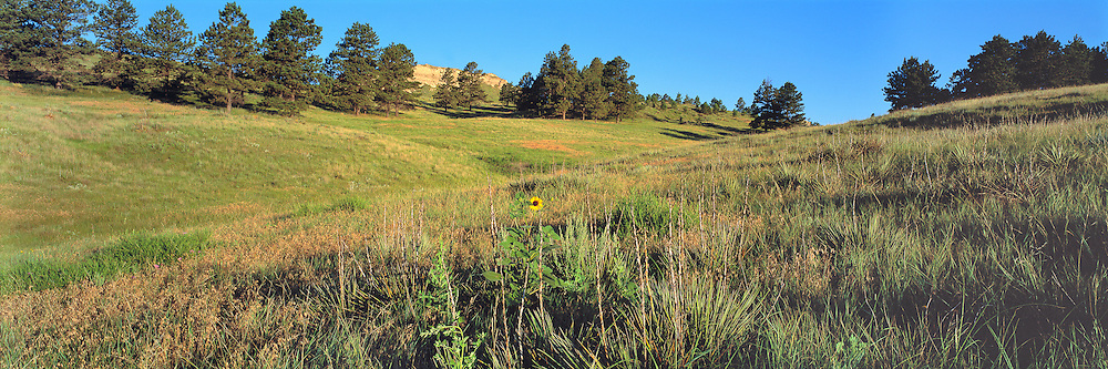 Meadow at Chadron State Park, Dawes County, Nebraska.