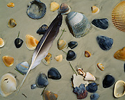 Gull feather and seashells on Gulf of Mexico beach, St. George Island, St. George Island State Park, Florida.