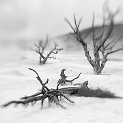 Dead Ghost Trees - Mammoth Terrace Hot Springs - Yellowstone National Park - Infrared Black & White - Lensbaby