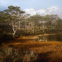 A hidden Lochan above Loch Clair, Torridon