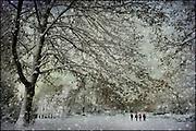Walkers in a snowy park