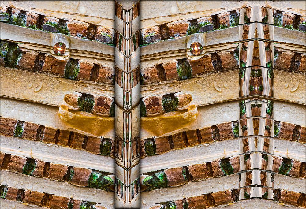 """Betula in Transition"", derivative image from a photo of a birch bark close-up design (Betula species), overcast light, Hubbard County, Minnesota, USA"