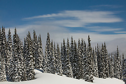 North America, United States, Washington, trees with snow and edge of ski slope on Crystal Mountain