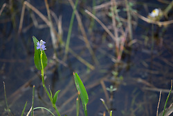 flowering orchid at Green Cay Wetlands in Florida