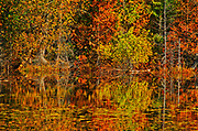 Wetland reflection along the boreal forest<br />Lake Superior Provincial Park<br />Ontario<br />Canada