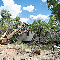 A tree cut down at JWJ Mobile Home Park in Fort Defiance, Ariz. falls on Karen Johnny's trailer breaking through the roof Tuesday, August 13 in Fort Defiance.