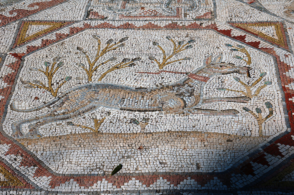 Segment of a mosaic floor of a monastery in bet guvrin, Israel, 6th century CE. From the Eretz Israel Museum AKA Haartz Museum, Tel Aviv, Israel
