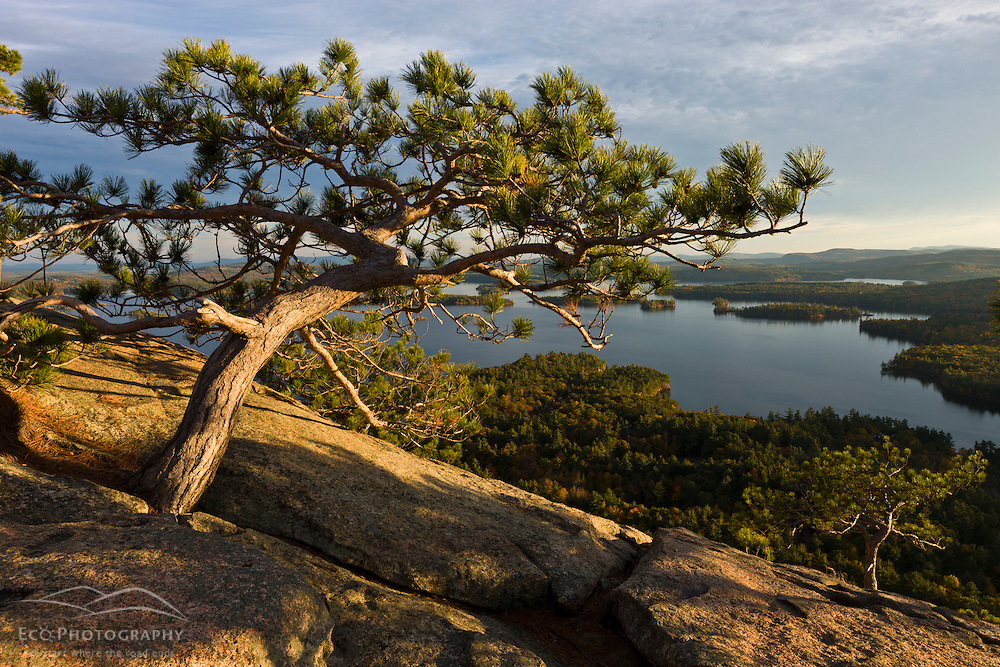 View of Squam Lake from West Rattlesnake Mountain in Holderness, New Hampshire. Fall. Pitch pine.