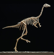Mononykus, found in the Gobi Desert of Mongolia was considered a primitive bird.