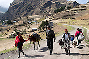The Ayme family on their way to the weekly market in Simiatug, Ecuador. They are taking two sheep to sell so they can buy rice, potatoes and other vegetables since their own potato  crop is not ready to harvest. (Supporting image from the project Hungry Planet: What the World Eats.)(MODEL RELEASED IMAGE)
