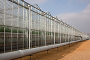 The Cornerways tomato nursery is the largest greenhouse in the UK. It is attached to the British Sugar factory in Wissington, Norfolk. The project is a revolutionary CHP combined heat and power system that uses the heat produced by refining sugar beet into sugar, to heat the tomato plants that are grown hydroponically.