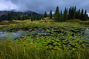 A Lily Pond lies just off Molas Pass in the San Juan Mountains of Colorado.