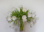 White Tulips in a glass vase.