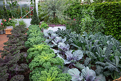 Lines of kale and cabbages in the Chris Evans Taste Garden, RHS Chelsea Flowers Show 2017. Kale 'Redbor', Kale 'Reflex', Cabbage 'Red Jewel' AGM and Kale 'Cavolo Nero' syn. 'Nero di Toscana'