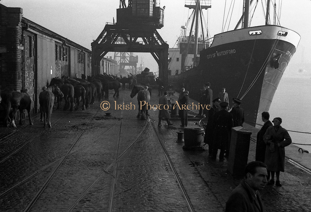 """17/12/1960<br /> 12/17/1960<br /> 17 December 1960<br /> Horses for export bound for Dieppe on the """"City of Waterford"""" at Dublin port. Picture shows a view of the waiting horses by the ship along the dock. Note the large pile of fodder by the ship."""