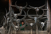 Buffalo skulls decorating house<br /> Chang Naga headhunting Tribe<br /> Tuensang district<br /> Nagaland,  ne India
