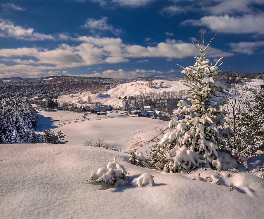 Balsam fir tree & field covered w/fresh snow, East Corinth, VT