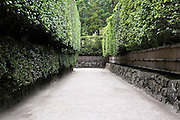 path between a high hedge in a Japanese garden