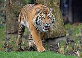2013_03_20_tigers_SSI