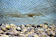 Nederland, Nijmegen, 10-12-2015 De nevengeul aan de overkant van de Waal bij Lent.  In de nieuwe dijk is een drempel gebouwd die stapsgewijs water doorlaat en bij hoogwater overloopt. Zicht op de inlaat, de drempel waar de geul begint. een fikse draaikolk, waterkolk, op de plek waar het rivierwater de duker in loopt.Grootste onderdeel van de vele werken van Rijkswaterstaat om bij hoogwater een betere waterafvoer in de rivier te hebben. Het is een omvangrijk project waarbij onder meer de pijlers van het spoorviaduct een bredere basis kregen omdat die straks in de loop van het water staan. Ook de n325 die vanaf de Waalbrug naar Arnhem loopt is over 400 meter opnieuw aangelegd omdat het talud vervangen wordt door een nieuwe brug met drie gracieuze pijlers. Het dorp veurlent komt op een kunstmatig eiland te liggen met twee bruggen als ontsluiting. Ruimte voor de rivier, water, waal.The Netherlands, Nijmegen. Measures taken by Nijmegen to give the river Waal, Rhine, more space to flow during highwater and to prevent the risk of flooding. Room for the river. Reducing the level, waterlevel. Large project to create a new paralel gully, an extra flow of water, so the river can drain more water during highwater. Due to climate change and expected rise, increase of the sealevel, the Dutch continue to protect their land from the water. Foto: Flip Franssen/HH