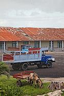Horse and cart in Gibara, Holguin, Cuba.
