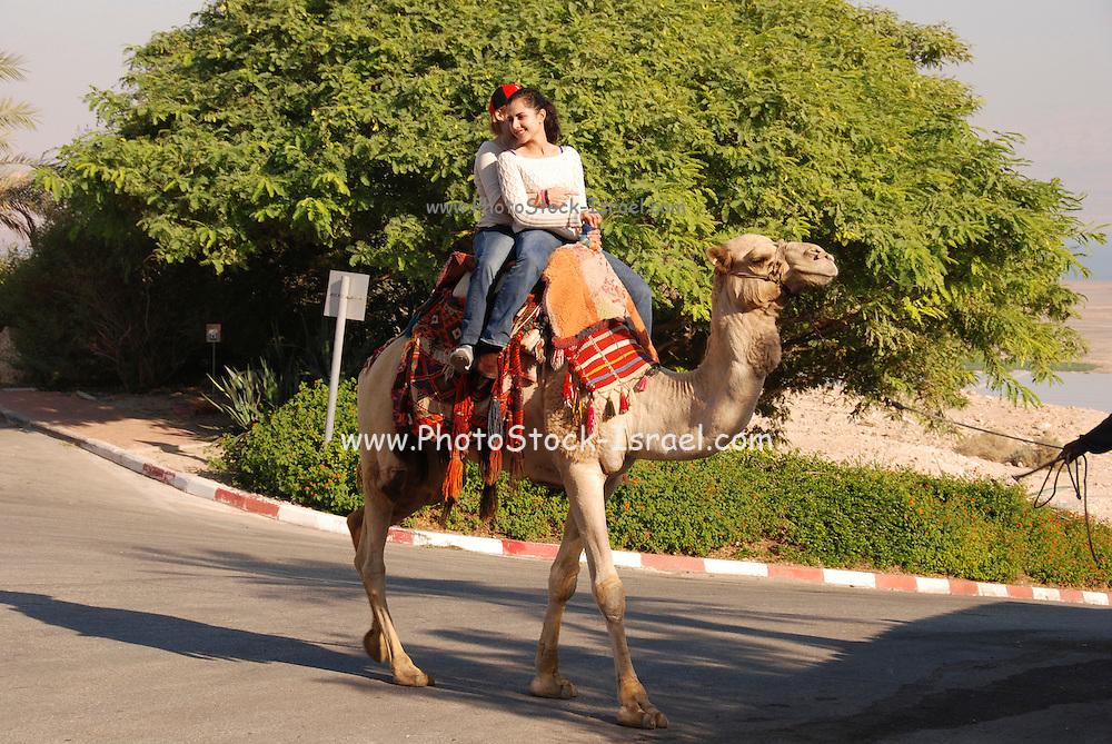 Israel, Ein Gedi, Near the Dead Sea tourists riding a camel