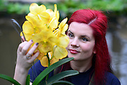 © Licensed to London News Pictures. 06/02/2014. Kew, UK. Horticulturist Ellie arranges the displays. Orchids, the first festival on Kew's 2014 events calendar showcases thousands of exotic and rare orchids. The tropical display can be viewed at The Princess of Wales Conservatory, where it's always hotter than 21°C, Kew Gardens, Saturday 8 February to Sunday 9 March 2014. Photo credit : Stephen Simpson/LNP